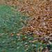 Høsten kommer ned bakken